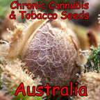 Chronic Cannabis & Tobacco Seeds Australia reviews