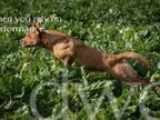 DWD Working Dog Foods reviews