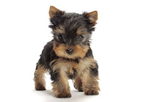 Home Boarding For Small Breed Dogs reviews