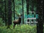 Mule Creative reviews
