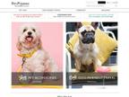 PetsPyjamas reviews