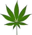 West Coast Cannabis Medical Marijuana Dispensary reviews