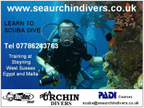 Seaurchindivers reviews