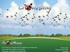 Crow Away reviews